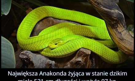 Jaką długość miała największa dziko żyjąca anakonda?