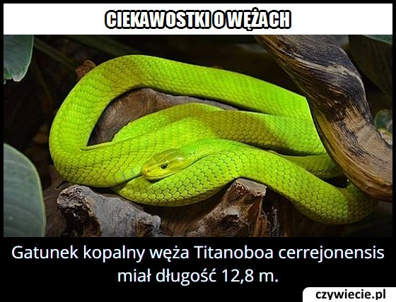Jaką długość miał wąż Titanoboa cerrejonensis?