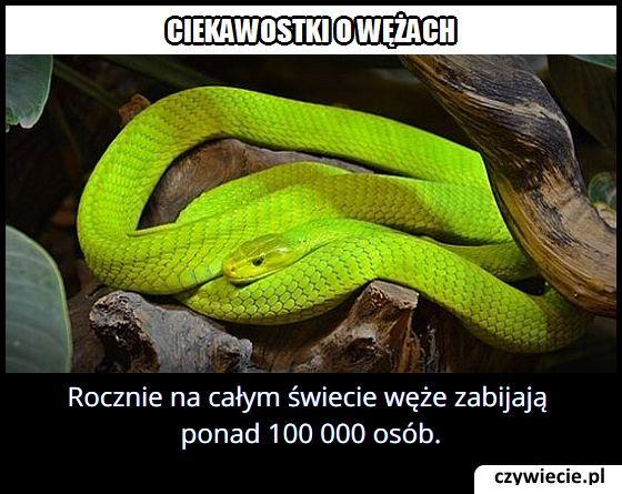 Ile osób na świecie ginie rocznie od ukąszenia węża?