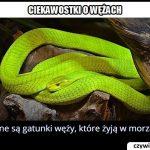 Istnieją   gatunki węży, które żyją w morzach?