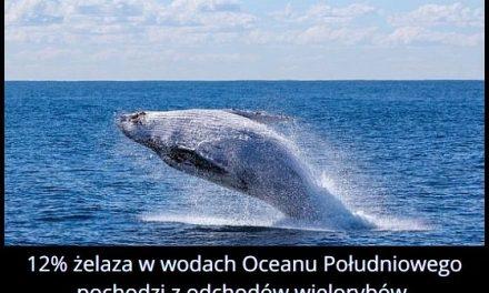 12% żelaza w   wodach Oceanu Południowego pochodzi z…