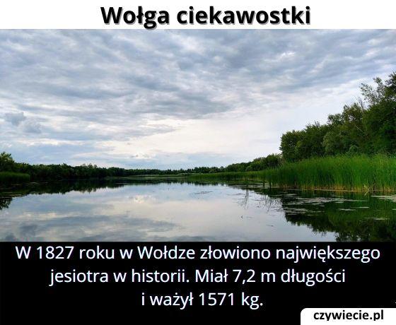 Jaką długość miał największy złowiony jesiotr?