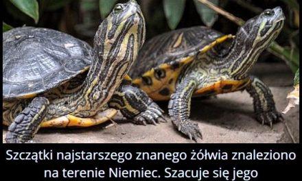 Gdzie znaleziono szczątki najstarszego żółwia?