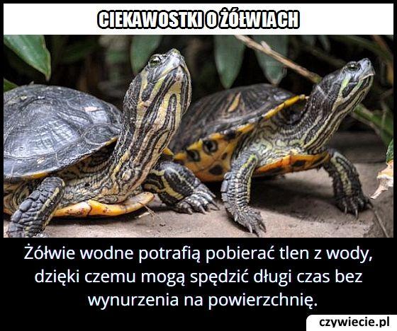 W jaki sposób żółwie oddychają pod wodą?