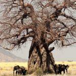 Quiz o drzewach – część 2