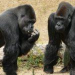 Quiz o ssakach – część 3